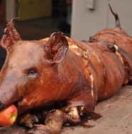 Beautifully cooked spit roasted pig with perfect crackle and totally cooked juicy meat